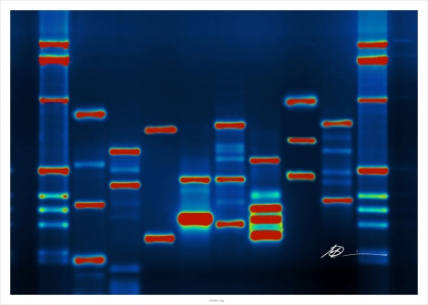 Micah's DNA, by micahb37 on Flickr. Used under Creative Commons license.