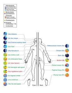 Skin Microbiome20169-300 by the National Human Genome Research Institute (NHGRI)