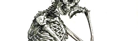 Vesalius 164frc on Wikimedia Commons.