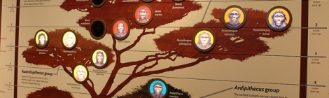 Human family tree by Ryan Somma on Flickr. Used under Creative Commons license. http://www.flickr.com/photos/ideonexus/4699752518/